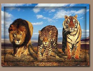 katzen und andere tiger